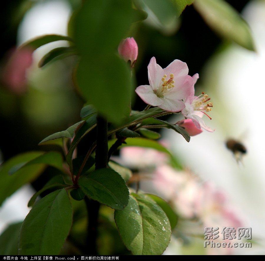 柳岸/春l临柳岸百花艳(1).jpg