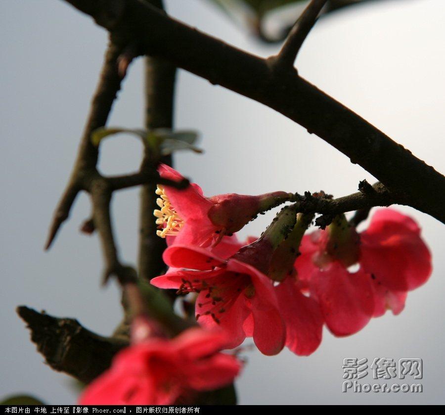 柳岸/春l临柳岸百花艳.jpg